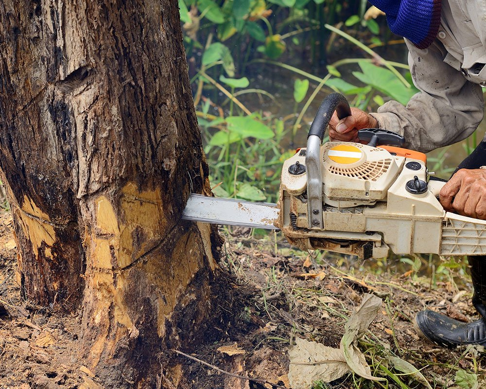 Tree Service Syracuse - Tree Removal