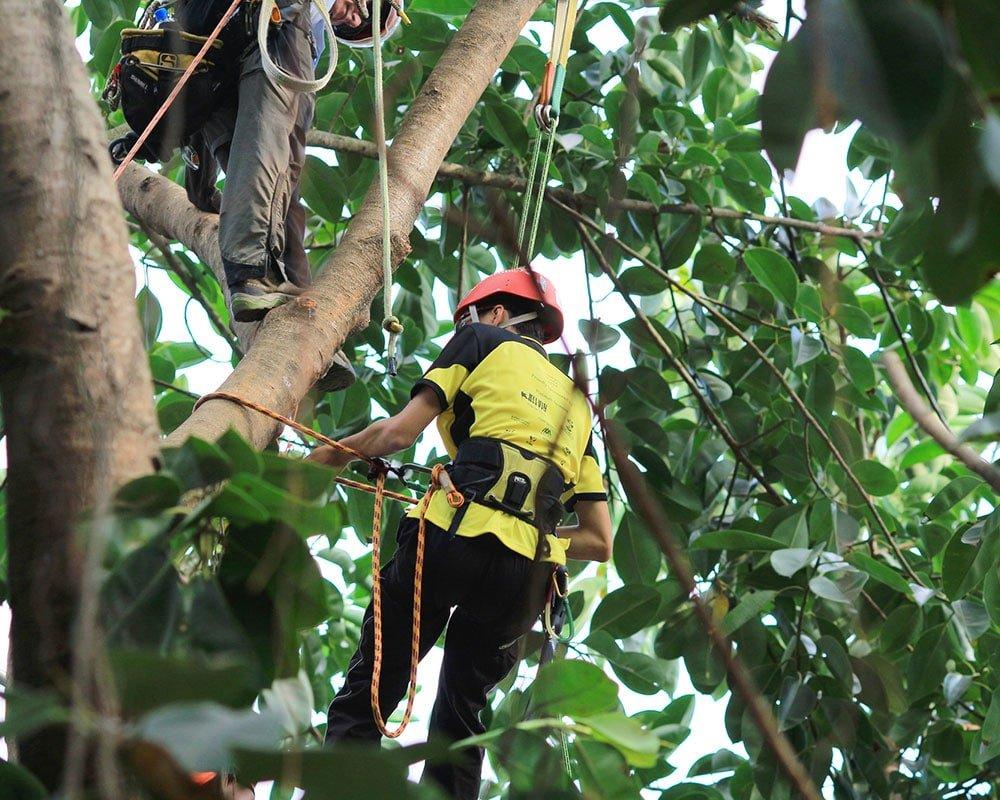 Tree Service Syracuse - Emergency Tree Removal