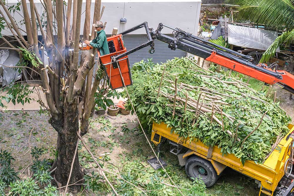 Tree Service Syracuse - Tree Pruning