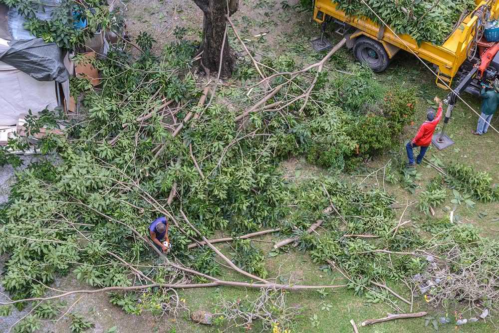 Tree Service Lysander - Tree Trimming
